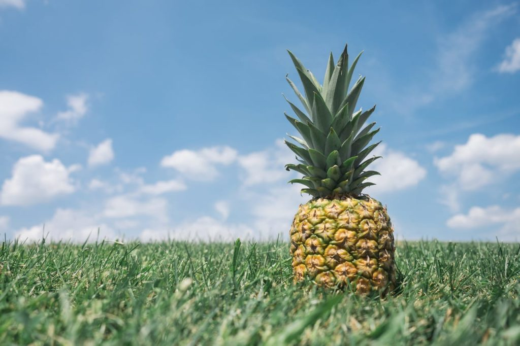 Pineapple And It's Health Benefits for Men's and Women's?