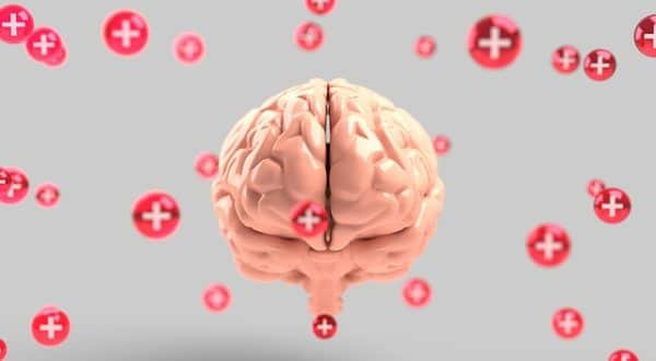 Amazing Discoveries About The Brain In 2019